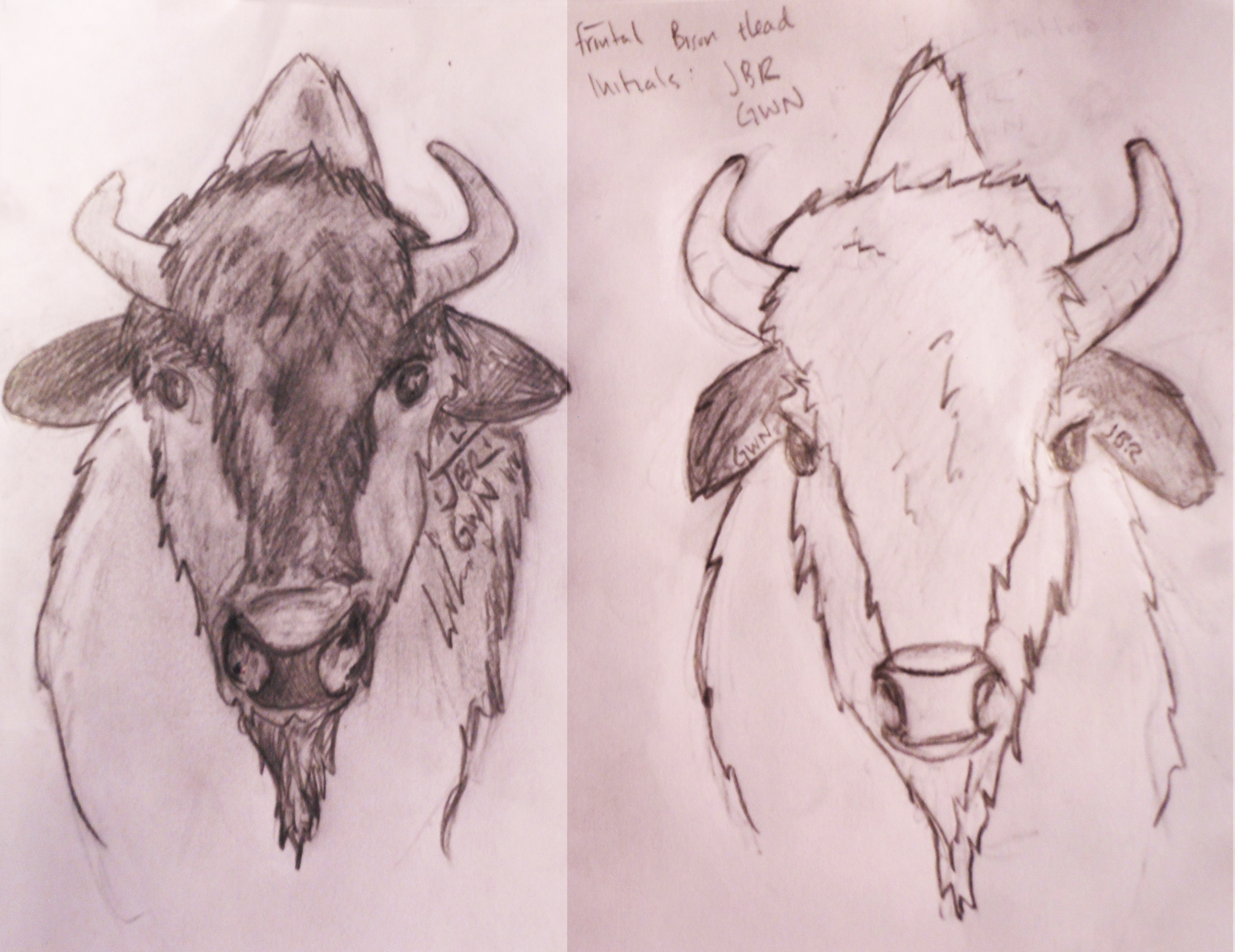 how to draw bison head